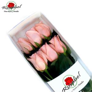 Caja de 6 Rosas Rosadas envios a dimicilio