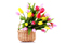 tulips Lima Peru