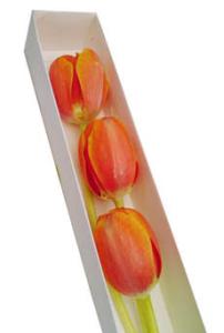 Caja de  3 tulipanes naranjas