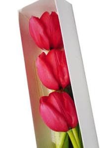 Caja de  3 tulipanes rojos