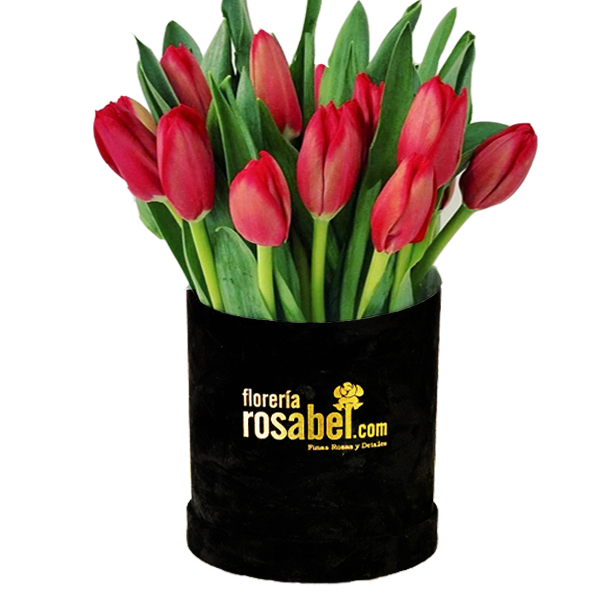 Tulipanes rojos box