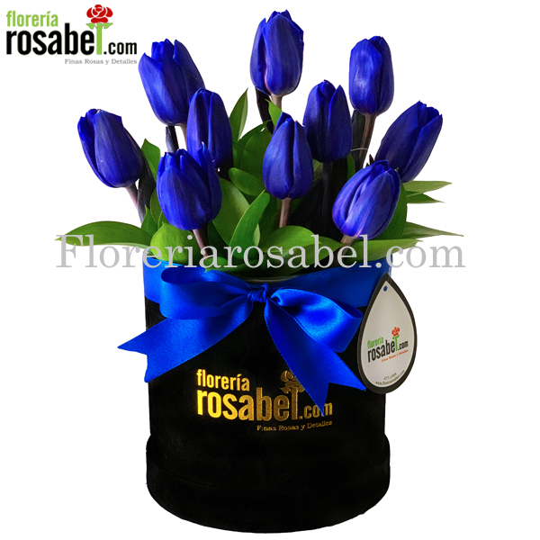 box de Tulipanes azules