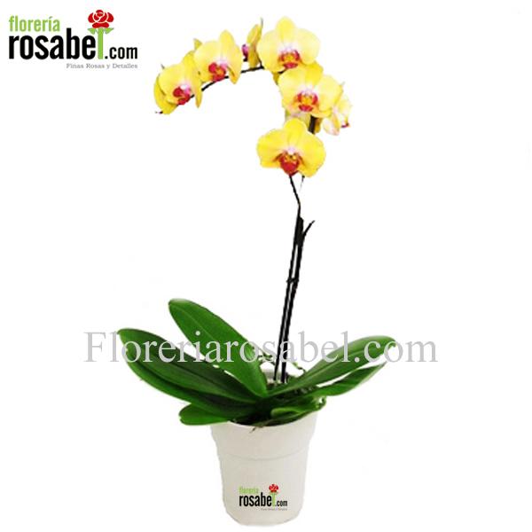 Planta de Orquidea Amarilla Centro Purpura -1 vara